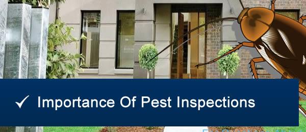 Pest Inspection Brisbane